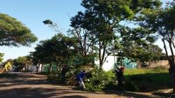 Árvore é podada na Rua Coronel Fernandes