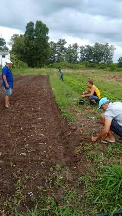 Limpeza e plantiu nos canteiros da horta da Granja Municipal