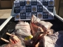 Grupo de Operações Especiais e servidores municipais apreendem mais de 190 kg de carne sem procedência